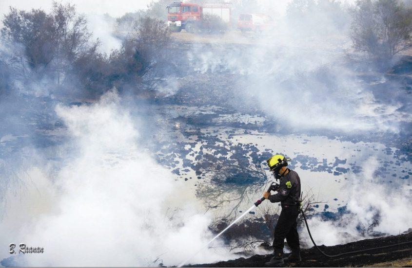 ארכיון: עשן בשריפה בבריכות החימצון. צילום:בועז רענן