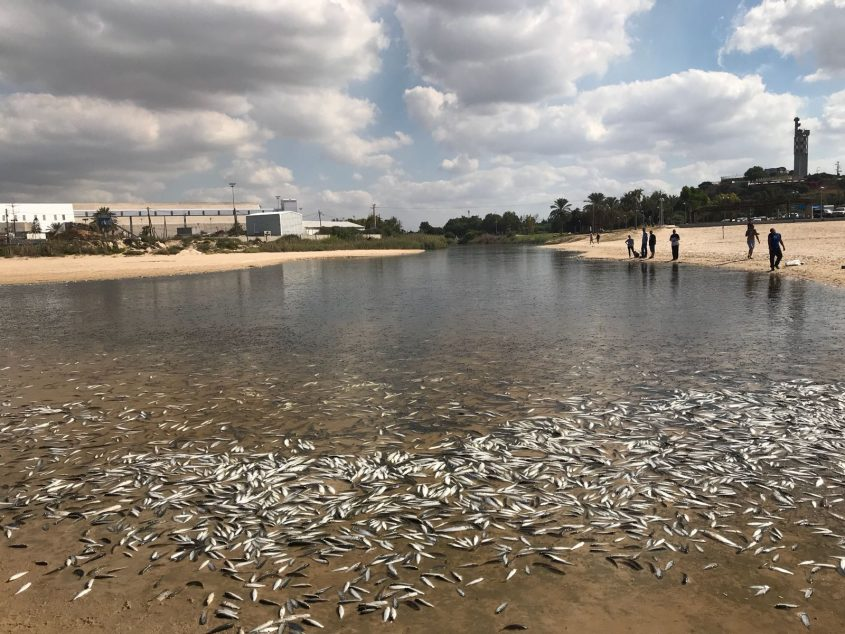 דגים מתים במוצא הנחל לפני יותר משנה. צילום: עיריית אשדוד