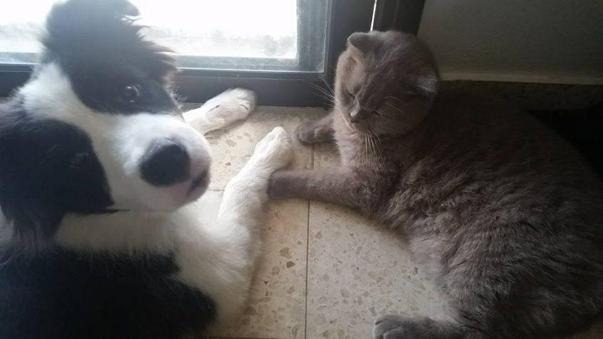 מילקי וחבר - החתול מורזיק. גם הוא גר בבית