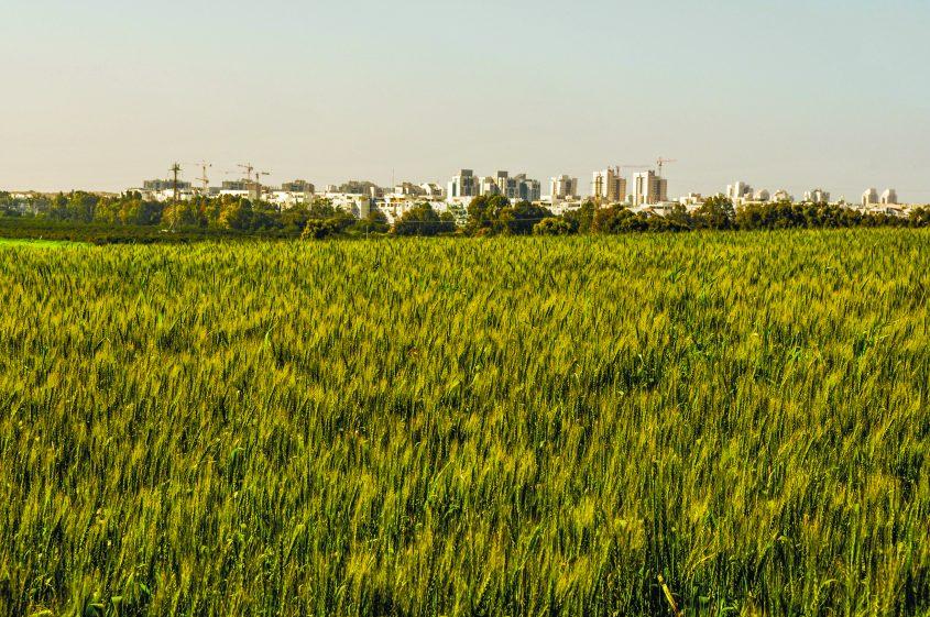 """""""המשולש החקלאי"""" ממזרח לאשדוד: האם יהפוך ל""""משולש הנדל""""ני על חשבון אלתא? צילום: אורי קריספין"""