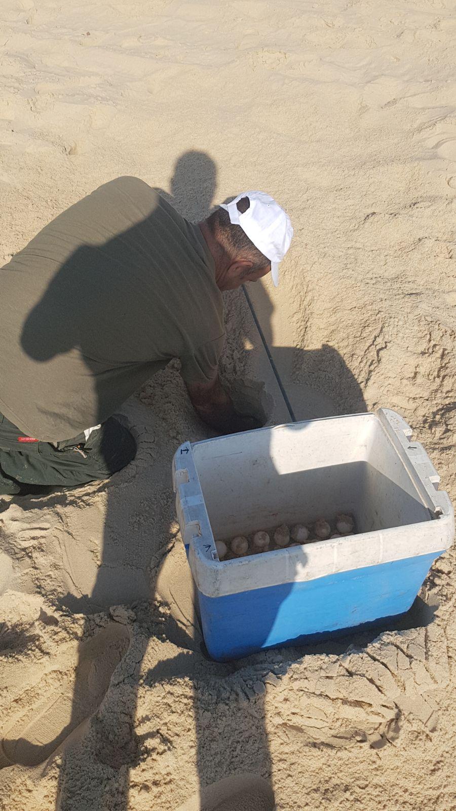 עונת ההטלה החלה. צילום: אגף החופים עיריית אשדוד