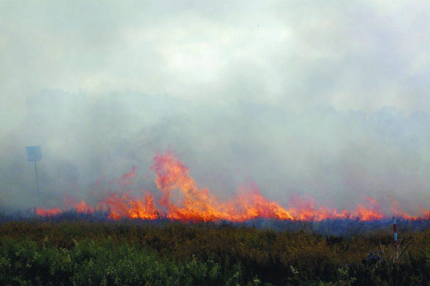 שריפה בשדה בעוטף עזה. צילום: אליהו הרשקוביץ