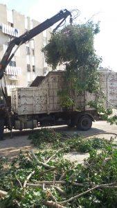 פינוי גזם צילום: עיריית אשדוד