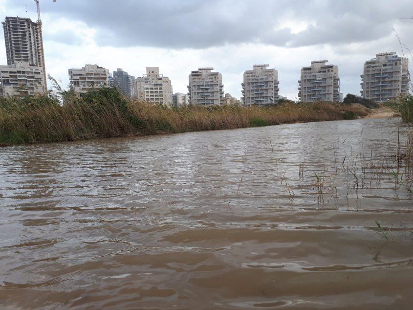 מי אמר שאין אגם במרינה? שלולית ענקית באזור המרינה היום. צילום: דור גפני