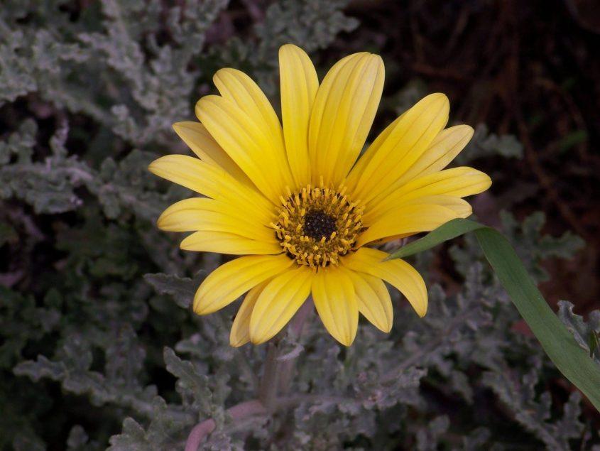 פרחי אשדוד צילום: יעקב איופנט