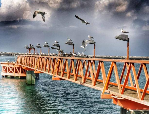 צילומי נמל צילום: תומר מוסקוביץ'