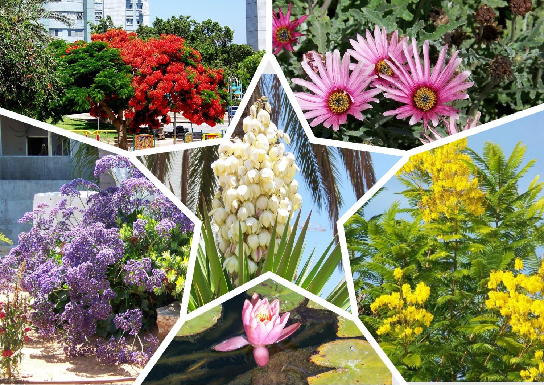 בכל העונות, בכל הצבעים: פרחי אשדוד
