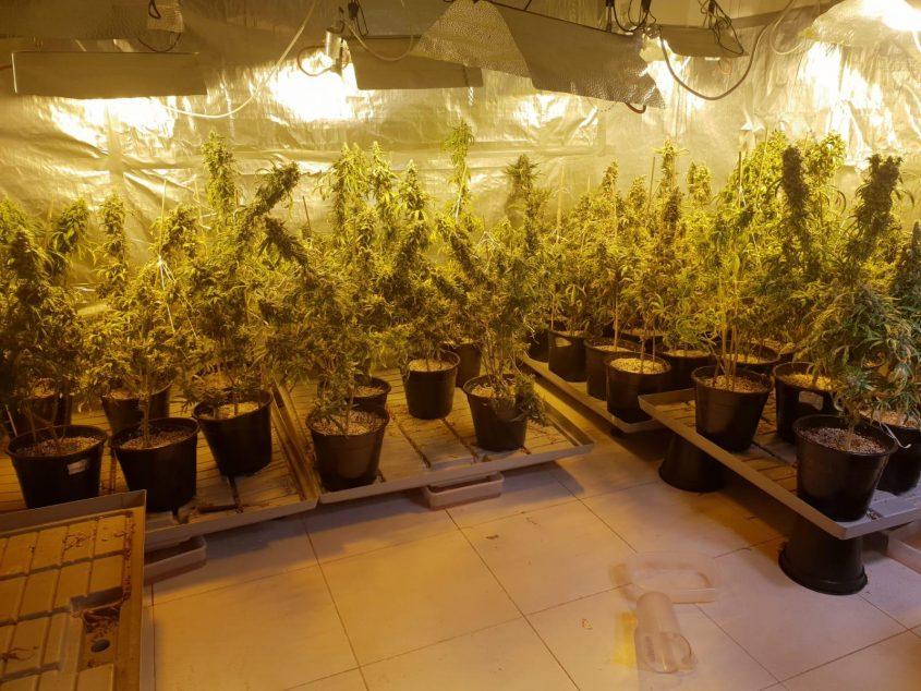 מעבדה לגידול סם מסוג מריחואנה הידרופוני צילום: דוברות המשטרה