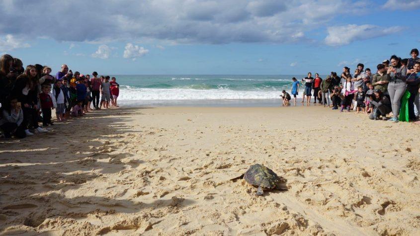 הצב גיאור חוזר הביתה, לים. צילום: גיא לוויאן רשות הטבע והגנים