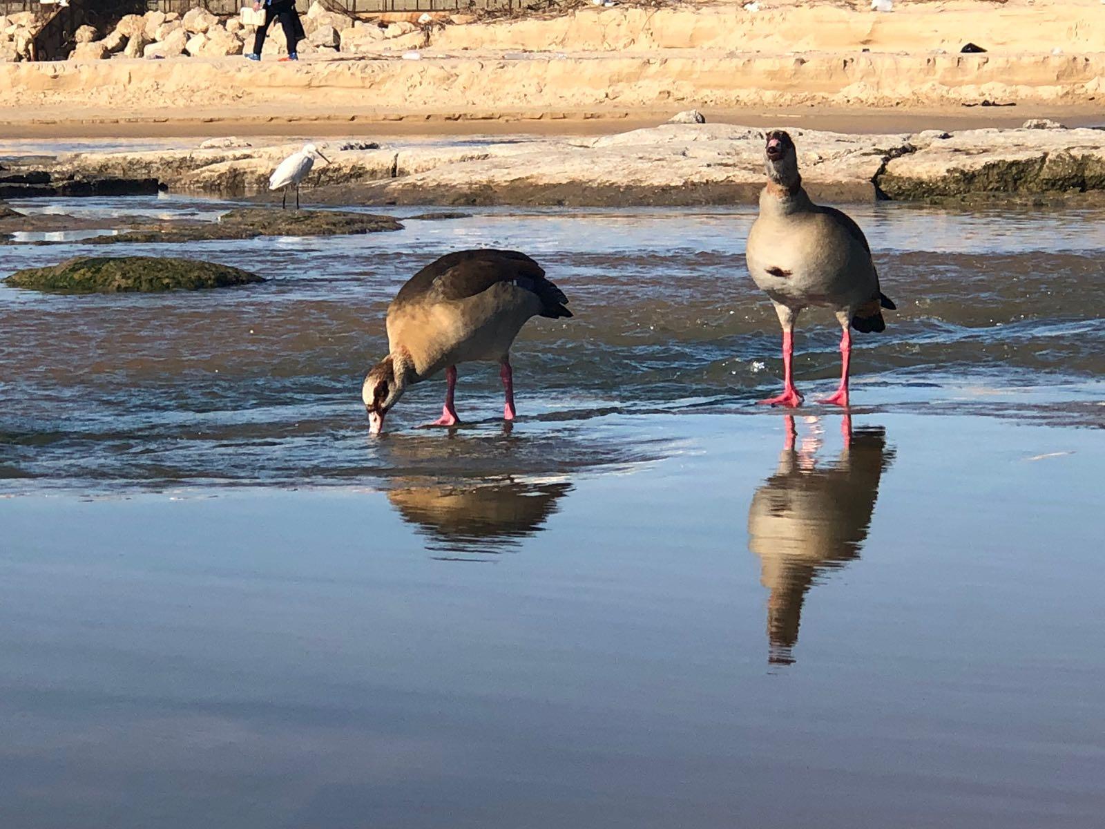 הציפורים בנחל לכיש צילום: ניר רוביסקי