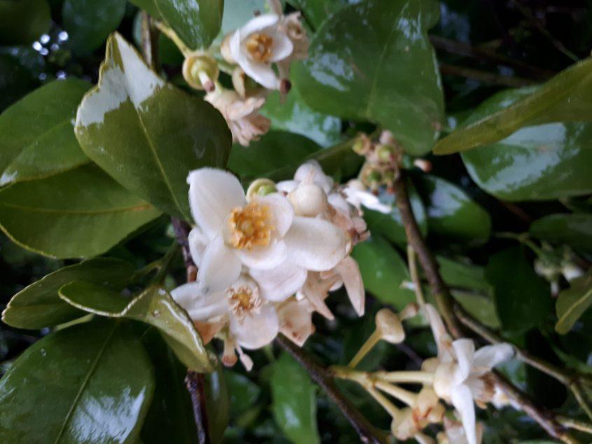 פרחי הדר הבוקר באשדוד. צילום: דור גפני