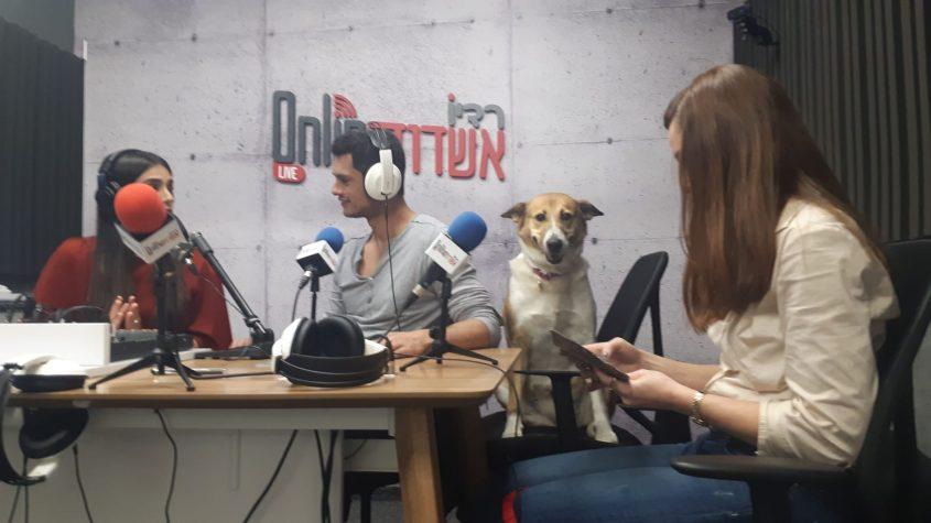 הכלבייה העירונית בשידור צילום: המחלקה הוטרינרית