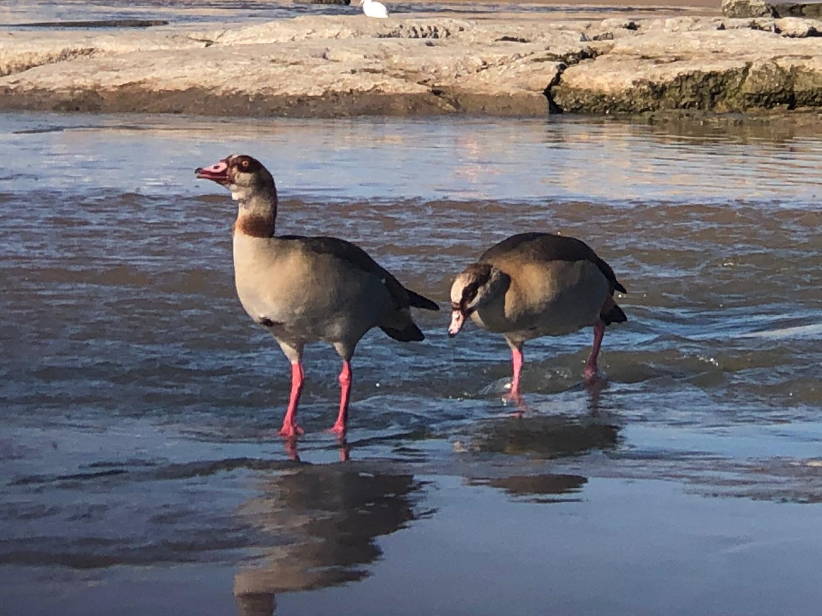 הציפורים בנחל לכיש צילום: שמואל דוד