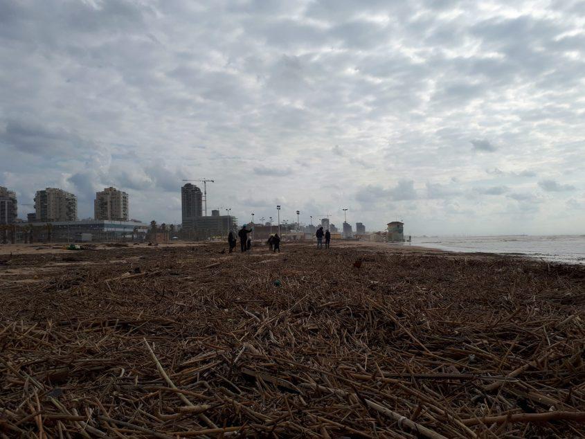 בקושי רואים חול. חוף הנחל וחוף מי עמי מכוסים בסחף צילום: דור גפני