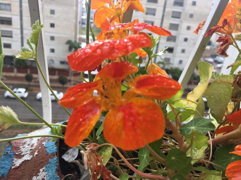 שנה ברוכת גשמים. צילום: נגה גפני