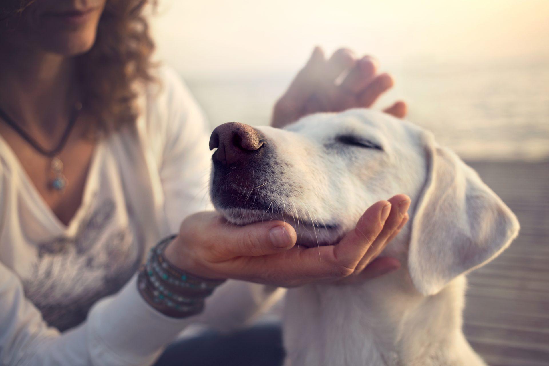 מאלפי כלבים בדרום. תמונה ממאגר Shutterstock