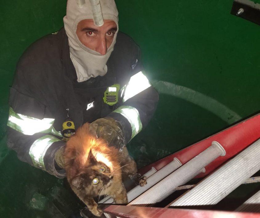 חילוץ החתול. צילום: דוברות כבאות והצלה