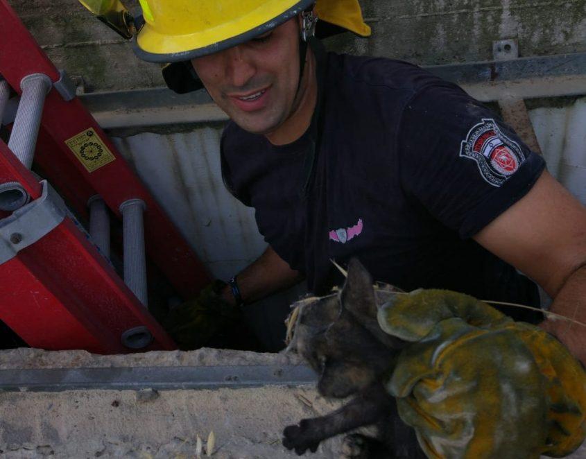 חילוץ גור חתולים מבור ביוב