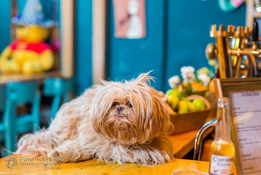 כלב. צילום: פבל
