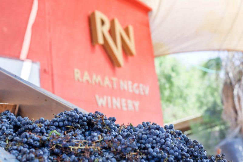 חוויית יין מיוחדת ומעשירה. צילום: יעל מוסקוביץ'