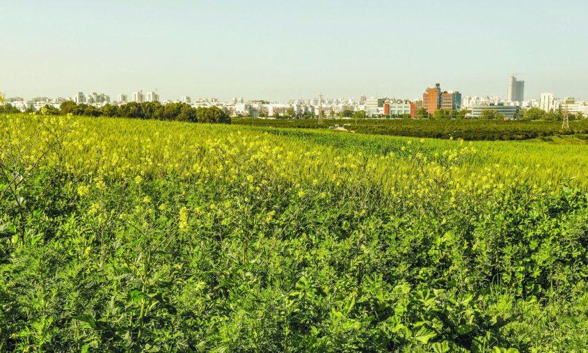 """יופשר לבניה? """"המשולש החקלאי"""", ברקע מפעל אלתא והעיר אשדוד. צילום: אורי קריספין"""