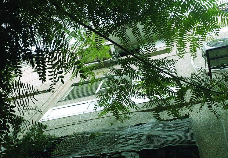 במרכז: החלון בקומה השניה, שממנו נפלה התינוקת בת החמישה חודשים, אימה מואשמת בניסיון רצח. צילום: דור גפני
