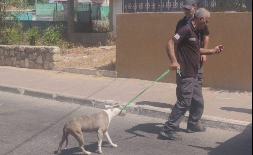 בית המשפט הרשיע בעלת כלב שתקף אישה בפארק ונשך אותה בחזה