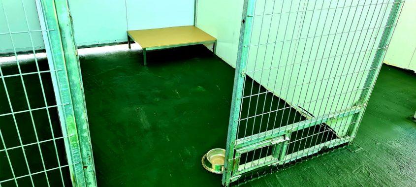מועצת גן יבנה הקימה כלבייה חדשה לשיפור השירות לתושב ולרווחת הכלבים והתושבים