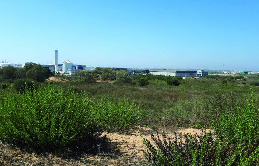 כאן מתוכנן להיבנות אזור התעשייה החדש. צילום: דור גפני