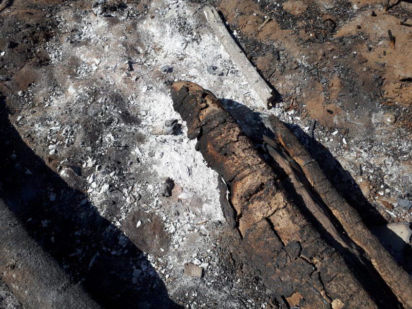 נזקי השריפה בשמורה. צילום: דור גפני