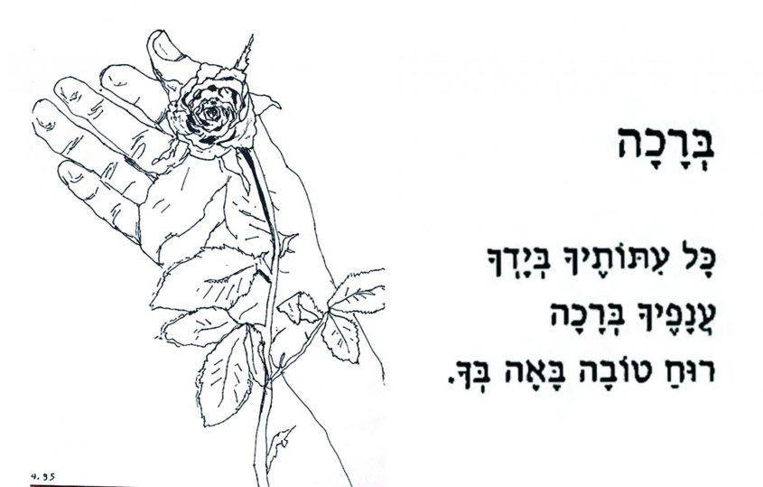 כתיבה: סמדר שרת ציור: רפי פרץ